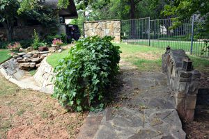 debbie ellis backyard 1DSC_5030