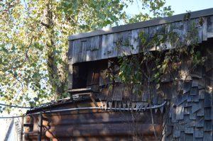 prairie-chicken-oct-2016-ts-20